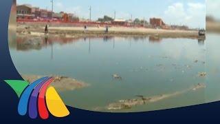 Hallan caimán en playa de Coatzacoalcos | Noticias de Veracruz