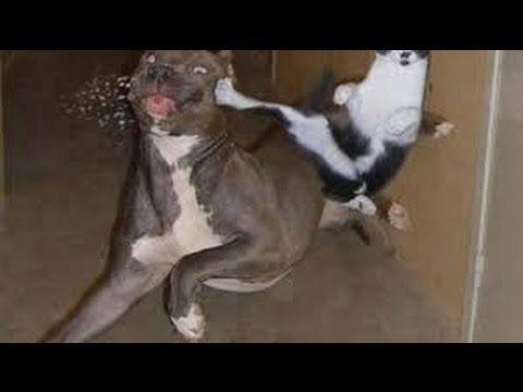 Funny Cats Video  - Best Funny Cat Videos #1 - 2016