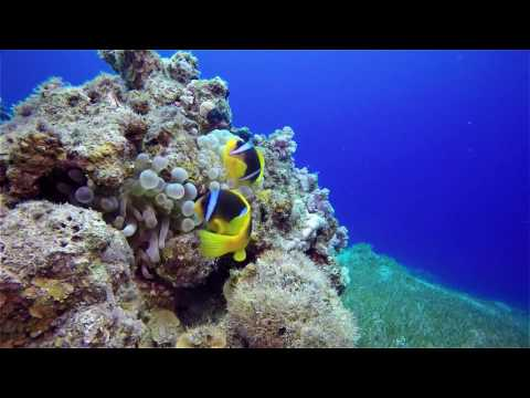 Red Sea Scuba Diving Experience