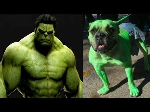 SuperHeroes In Real Life As Cat And Dogs #pets