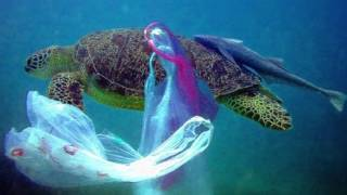 Download Video Water Pollution MP3 3GP MP4