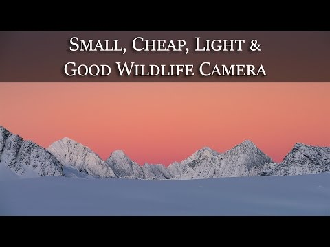 Small, Cheap, Light, Awesome Wildlife Camera?