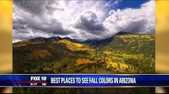 Fall colors in Arizona