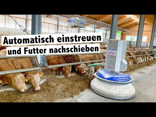 Bullenmastbetrieb Friesacher setzt auf Hetwin Einstreuroboter Astor und Futterschieber Stallboy
