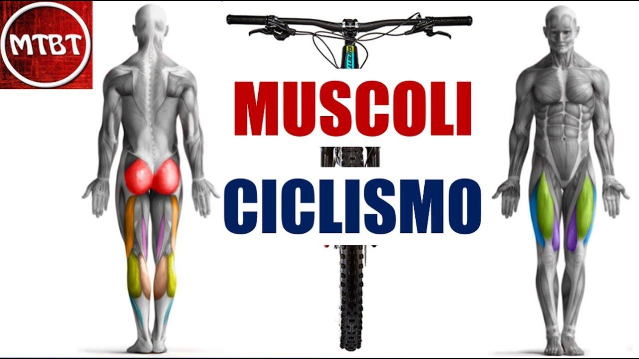 Ciclismo Muscoli Gambe Lavoro In Fase Di Spinta Transizione E Risalita Della Pedalata Mtbt Youtube