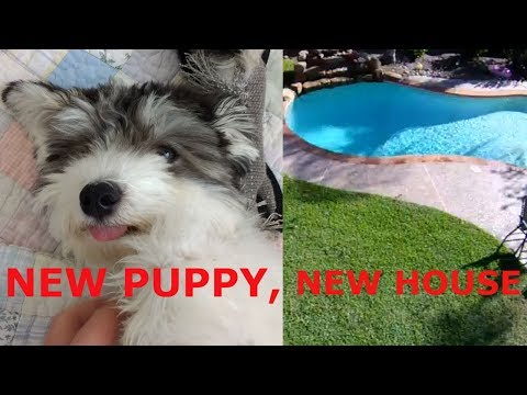 New House in Texas, and Our New Puppy!
