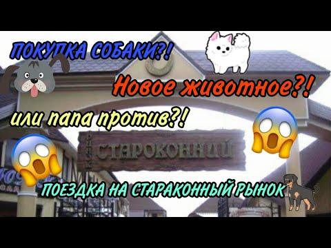 Родители, купите собаку!/  Староконный рынок Одесса/ Рынок животных/ VLOG