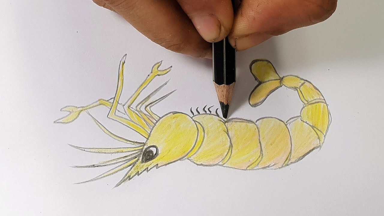 How To Draw Shrimp Easy Shrimp Drawing With Pencil Step By Step