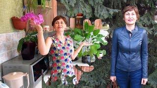 Домашний салон красоты,цветочная стрижка, растюшки.С наступающим Праздником Светлой Пасхи.