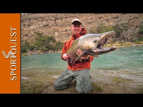 Argentina fly fishing king chinook salmon 1080p hd for Fishing in argentina