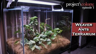 How to set up a WEAVER ANTS (Oecophylla smaragdina)  Terrarium / Vivarium. [Project: Colony] Ep 1.