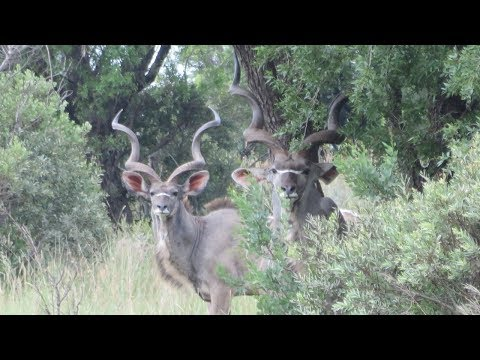 Hunting In South Africa Video: This Is What It's Like