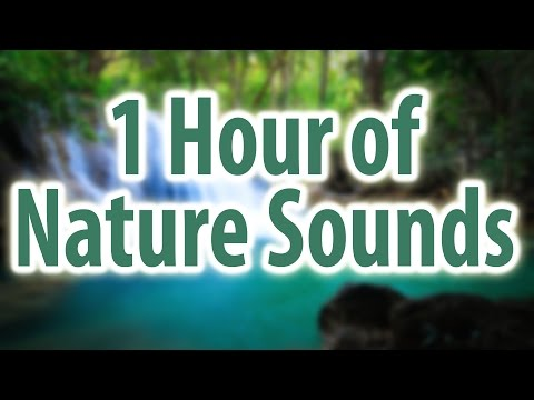 NATURE SOUNDS 1 HOUR | Rain, Stream, Ocean, Creek, Birds, River, Waterfall, Japanese Fountain