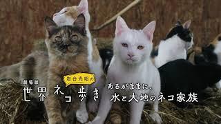 『劇場版 岩合光昭の世界ネコ歩き あるがままに、水と大地のネコ家族』予告編