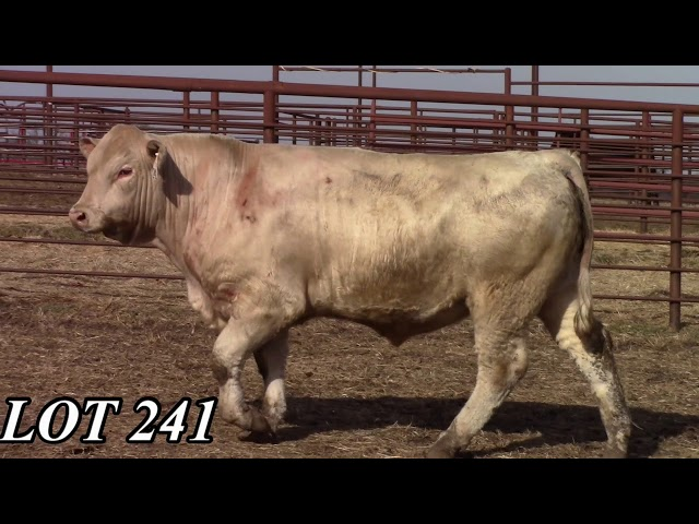Mead Angus Farms Lot 241