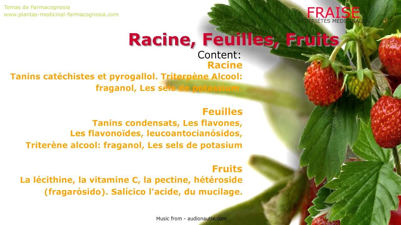 fraise. les propriétés médicinales. les bienfaits du fraise - youtube