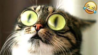 КОШКИ СОБАКИ 2019 ПРИКОЛЫ С КОТАМИ И СОБАКАМИ / Смешные Животные Котики и коты 2019 Funny Cats