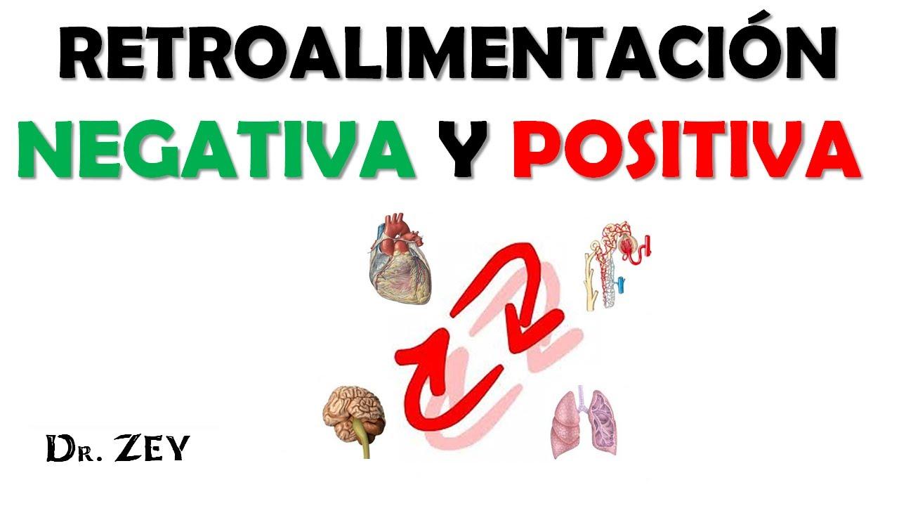 RETROALIMENTACION NEGATIVA Y POSITIVA - FISIOLOGIA - YouTube