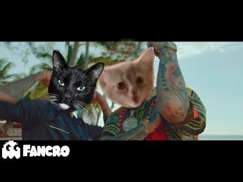 Pedro Capó - Farruko - Calma Cover Gatos