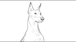 PK Draw How to draw Doberman Dog