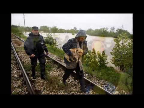 Animal rescue, floods in Serbia 2014