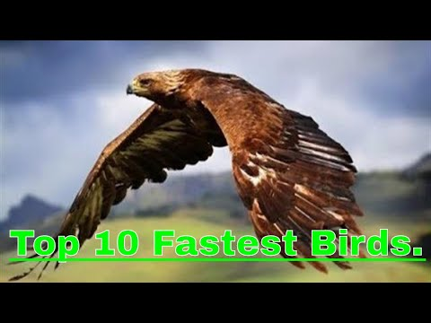 Top 10 Fastest Birds In The World 2018.The Birds That Can Beat Most Of Racing Cars.Fastest Creatures