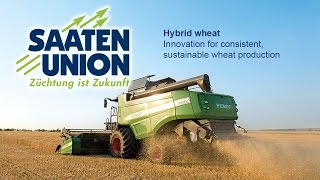 Saaten-Union: Hybrid wheat - Innovation for consistent, sustainable wheat production (English)