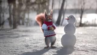 Забавные белки Первого канала 2017