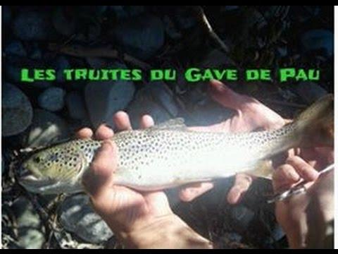 Pêche des truites farios du gave de Pau .(HD)