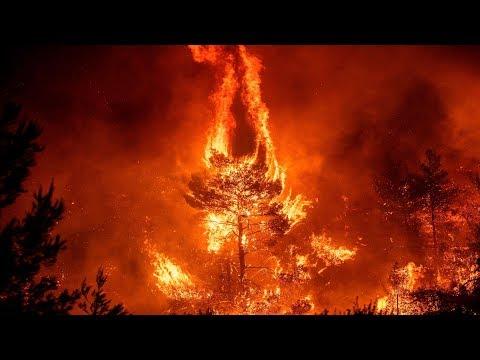 Amazon Rainforest Is On FIRE !!!