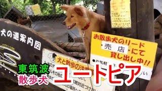 犬好きな方むけに園内を犬と一緒に散歩できるサービスがありました。