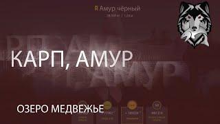 RF4 РР Русская Рыбалка 4 Озеро Медвежье Карп Амур