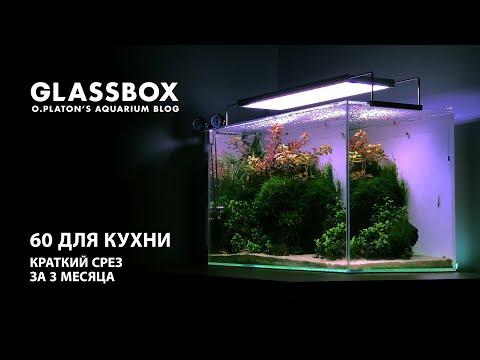 Видео: 60 для кухни - Краткий срез аквариума за 3 месяца.