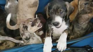 10 самых симпатичных щенков! TOO CUTE. Find all the puppies!
