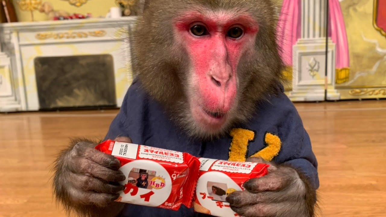 お猿のカイくんがパッケージのグリコのビスコ!?!? - YouTube