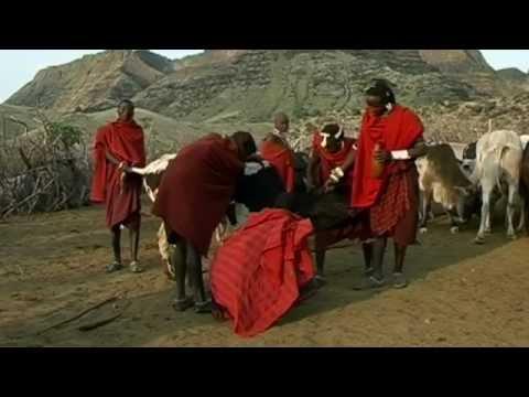 Massai: drinking blood with milk