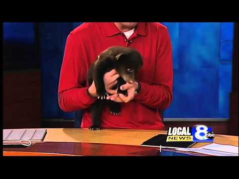 Yellowstone Bear World cubs visit Local News 8
