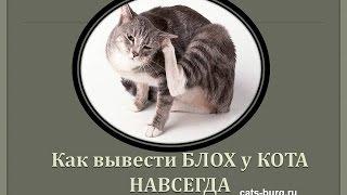Как вывести блох у кота с помощью петуха / Cat and chicken