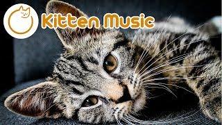 Спокойный мой котенок! Расслабляющая музыка, разработанная, чтобы помочь вашему котеню!