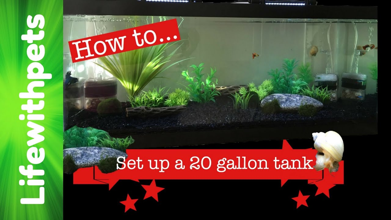 How To Set Up A 20 Gallon Fish Tank Youtube