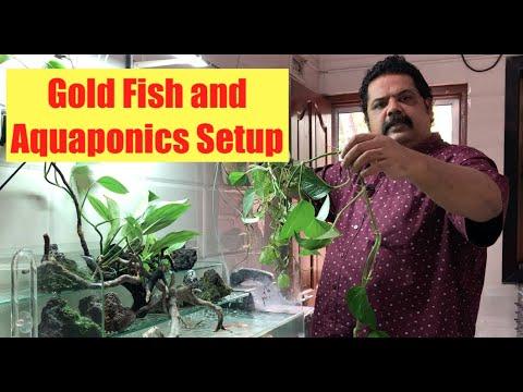 What Is Aquaponics? How It Works? Aquaponics For Beginners | Goldfish & Aquaponics Waterfall Setup