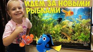 ВЛОГ:ПОКУПАЕМ АКВАРИУМНЫЕ РЫБКИ/ПОХОД В ЗООМАГАЗИН/Vlog:SHOPPING aquarium fish/TRIP to the pet store(ВЛОГ: Веселый поход в зоомагазин!!! ПОКУПАЕМ НОВЫЕ АКВАРИУМНЫЕ РЫБКИ!!! София с папой запускают новых рыбок..., 2016-09-20T19:52:16.000Z)