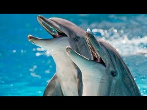 How smart are Animals NOVA w/ Neil DeGrasse Tyson HD