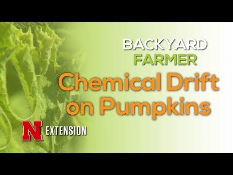 Chemical Drift on Pumpkins