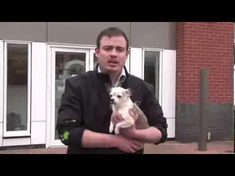 understanding-dog-breeds---chihuahua