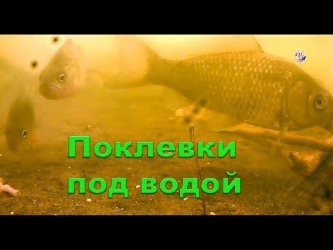 поклёвка на фидер ! » Видео о рыбалке и ловле рыбы