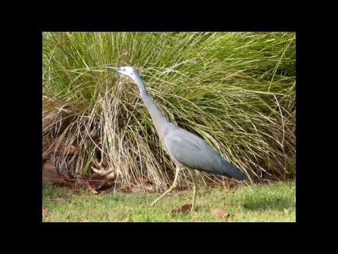 Water Birds Part 1