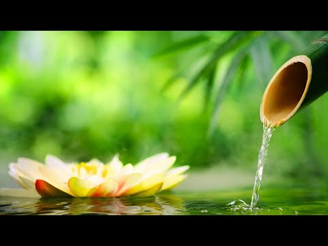 Relaxing Music, Healing Music, Reiki Music, Sleep Music, Spa, Study Music, Meditation Music, ☯2025