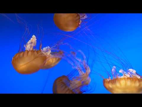 Omaha's Henry Doorly Zoo Aquarium - GH5