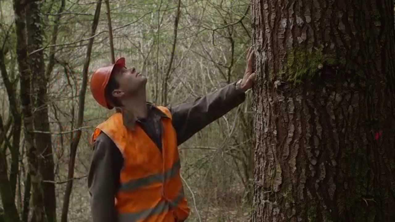 Comment devenir ingenieur forestier